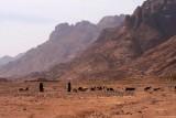 9383 Bedouin goat herders.jpg
