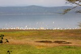 3733 Flaminos Lake Nakuru.jpg