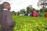 3895 Plantation tour Kericho.jpg