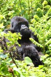 5157 Mother Gorilla.jpg