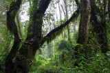 5583 Rainforest Mount Kili.jpg