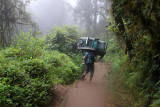 6182 Porter Rainforest Kili.jpg