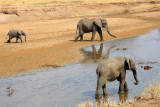 6357 Elephants Tarangire River.jpg