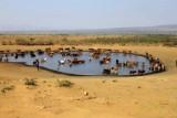 2552 Watering hole livestock.jpg