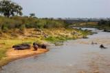 2954 Hippos Mara River.jpg