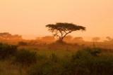 4540 Acacia sunrise QE.jpg