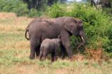4623 Baby elephant feeding.jpg