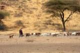 6225 Goat herders.jpg