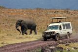 6679 Elephant Ngorongoro.jpg