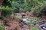 6797 Elephant Lake Manyara.jpg