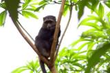 6821 Monkey Lake Manyara.jpg