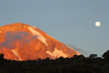 5827 Moonrise Kili at Shira.jpg