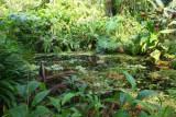 10036 Rainforest swamp.jpg