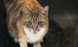 Colby, the Cat Next Door