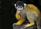 Monkey London Zoo
