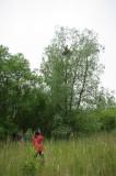 K20D9641.jpg Het nest is groot genoeg om Peter te dragen