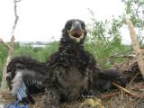 foto: Peter de Boer SOVON Vogelonderzoek Nederland.jpg