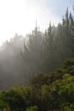 Poli Poli Ttrees and mist 08105