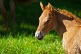 horse 07717 baby horse