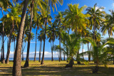 Kapuaiwa coconut grove 02411