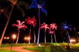 Palm tree 25829
