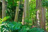 Painted Eucalyptus 29710