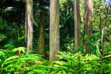 Painted Eucalyptus 29713