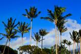 Palm trees 33173.jpg
