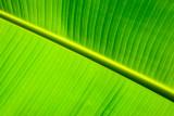 Banana Leaf RD-682 .jpg