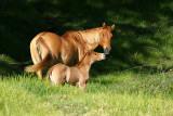 Horse - A New Additon