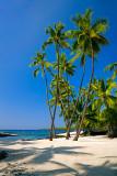 Palms on White Sand