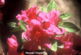 Hoosier Charm