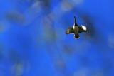 NOV_8151: Flyover