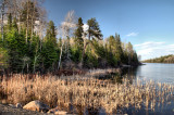 ELY_3133-37: Somewhere in Superior National Forest