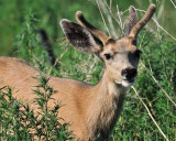 CO2_4773: Rocky Mtn Arsenal Wildlife Refuge