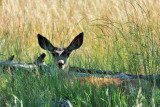 CO2_4811: Rocky Mtn Arsenal Wildlife Refuge