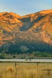 WY4_8884 Teton horses