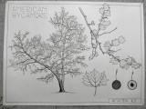 CAP162.0 trees sum11