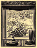 Inside Looking Out