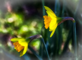 Welcome St David's Day