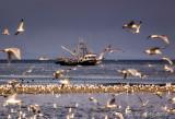 Sea Birds and Fishing Boats