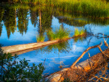 Reflections in a Beaver Pond.