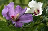 Wet Blooms
