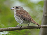 Wild Birds in Singapore