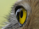 birds_eye_view