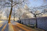 frozen benches