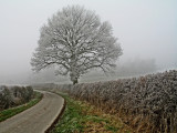 road past the frosty tree.