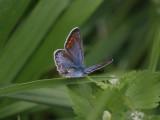 Swedish Butterflies & Moths