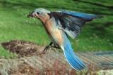 Nest-Building Flight Path