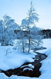 Winter in Nordmarka, Oslo